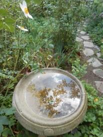Descanso Gardens 10-21-2012 003