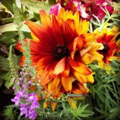 Fall Season at Descanso Gardens