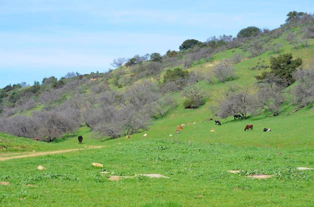 Orange County (3)