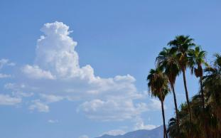 PalmSprings outdoors (6)