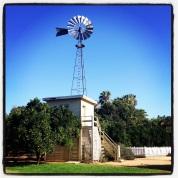 So Cal Walks (Fullerton Arboretum)