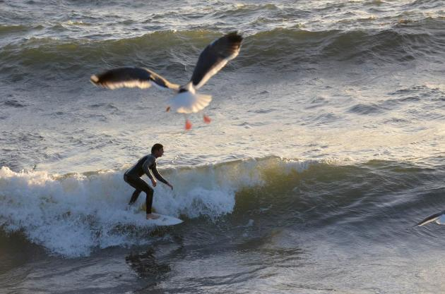 Santa Monica surfer and seagull