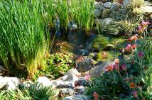 South Coast Botanic (14.5)