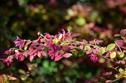 South Coast Botanic (3)