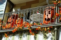 Fall Disneyland (10)