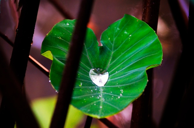 Fullerton Arboretum after the rain 091