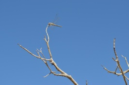 Joshua Tree (146)