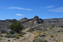 Mojave National Preserve 262