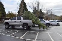 Tree too big, truck too small?