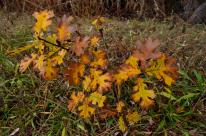 Last of the autumn color