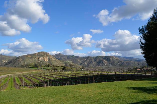 Orfila Winery 2