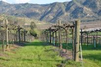 Orfila Winery 7