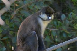 San Diego Zoo Anniversary Trip 033