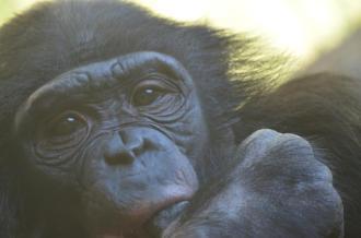 San Diego Zoo Anniversary Trip 084