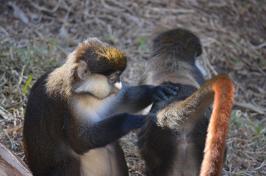 San Diego Zoo Anniversary Trip 143