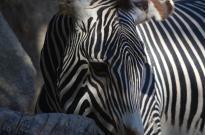 San Diego Zoo Anniversary Trip 181