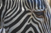 San Diego Zoo Anniversary Trip 201