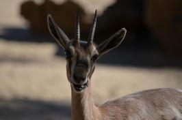 San Diego Zoo Anniversary Trip 240