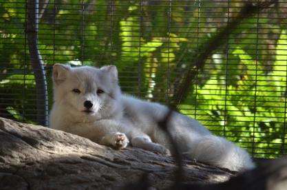 San Diego Zoo Anniversary Trip 247