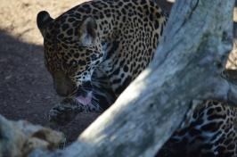 San Diego Zoo Anniversary Trip 314