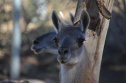 San Diego Zoo Anniversary Trip 324