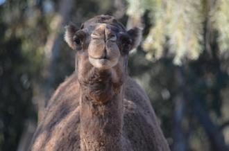 San Diego Zoo Anniversary Trip 357