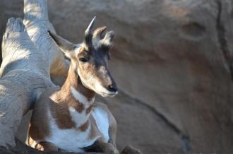 San Diego Zoo Anniversary Trip 361
