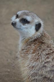 San Diego Zoo Anniversary Trip 424