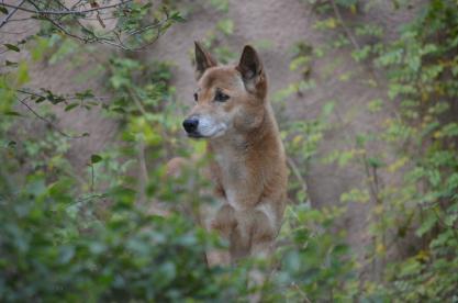 San Diego Zoo Anniversary Trip 463