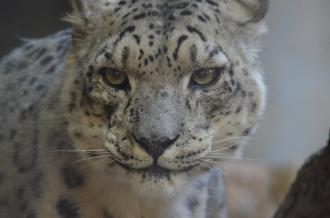 San Diego Zoo Anniversary Trip 480