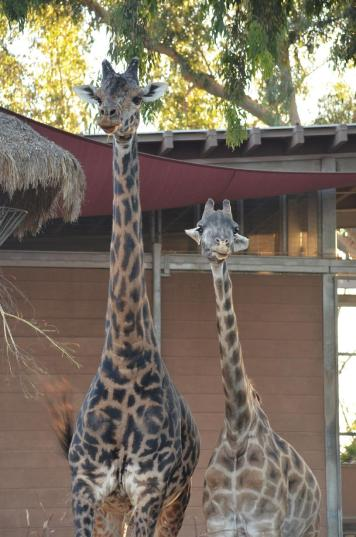 San Diego Zoo Anniversary Trip 577