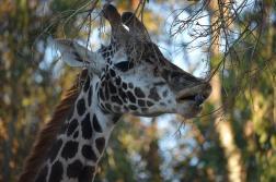 San Diego Zoo Anniversary Trip 583