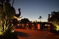 San Diego Zoo Anniversary Trip 752