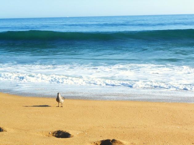 Seagull  (1)