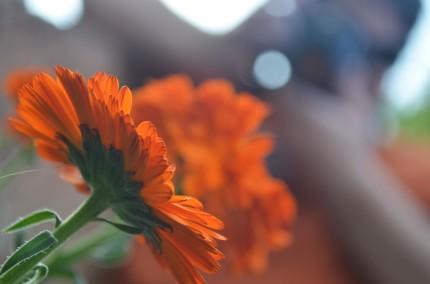 Focused on a Flower