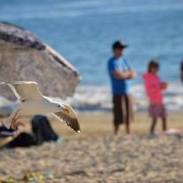 Kat's amazing seagull photo!