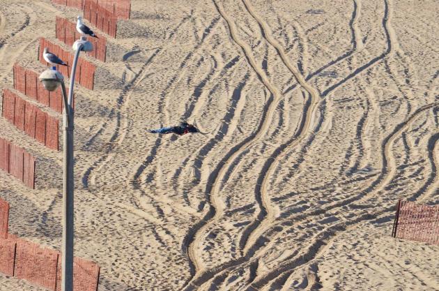 Beach, Wake Up (10)
