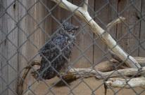 Hidden Zoo (1)