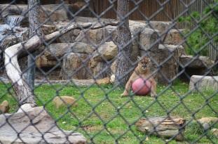 Hidden Zoo (10)
