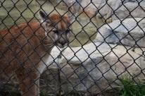 Hidden Zoo (11)