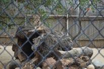 Hidden Zoo (2)