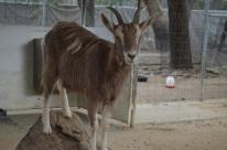 Hidden Zoo (5)