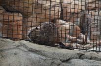 Hidden Zoo (9)