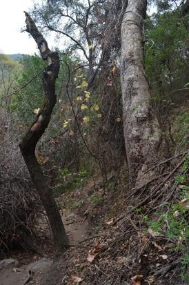 Hiking Holy Jim Trail (9)