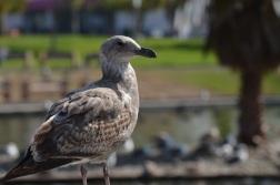MacArthur Park pics with Jeanne 062