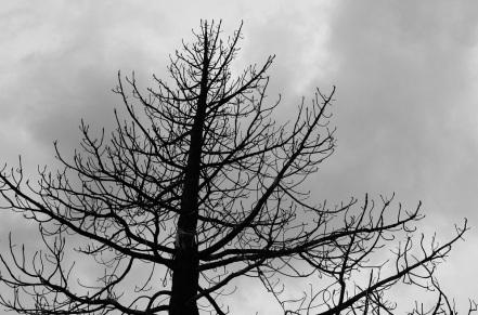 Mighty Trees (6)