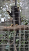 Monkeying Around (3)