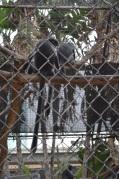 Monkeying Around (4)