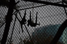 Monkeying Around (5)
