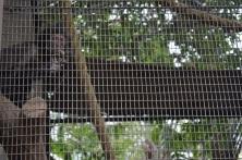 Monkeying Around (6)